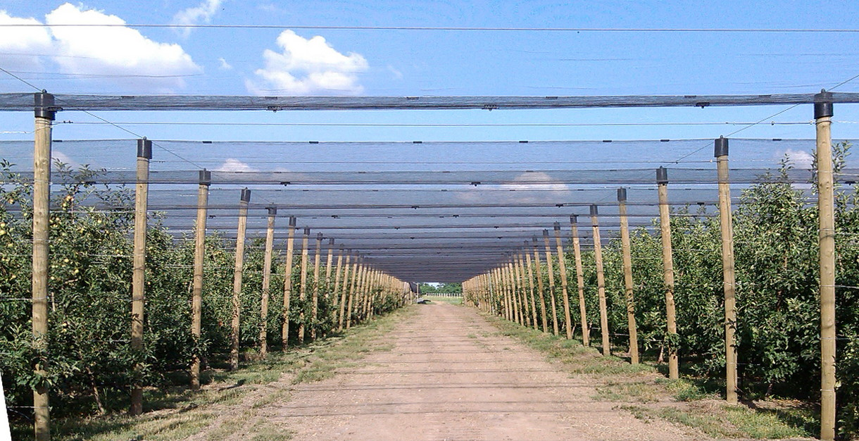 Orchard hail protection net Greeny Arandjelovac